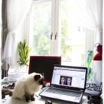 Att längta hem till katten
