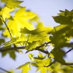 Botaniska del 10 – Genom löven