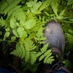 Att plocka bilder i skogen
