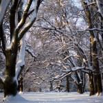 Vackert vinterlandskap