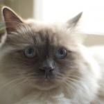 Framsteg i kattfamiljen