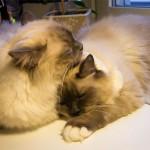 Dagens kattbilder – tvätt under tvång