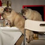 Mer katter, går det att motstå?