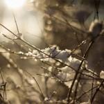 Vintersaknad