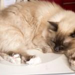 Blandade kattbilder att njuta av
