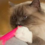 Uchi och hans avsky för neon