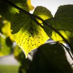 Lövspel