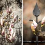 Årets vårblomster