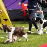 Hundutställning i Norrköping – men mest Eurasier