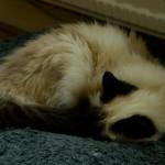 Wendy på sin kudde