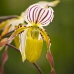 Botaniska del 2 – Orkidéer